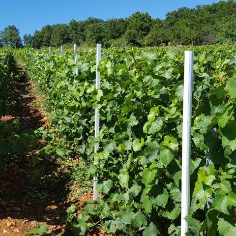 Conception d'un kit de pulvérisation pour le traitement de la vigne